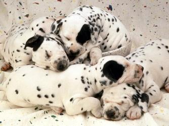 wpid-razas-perros.jpg